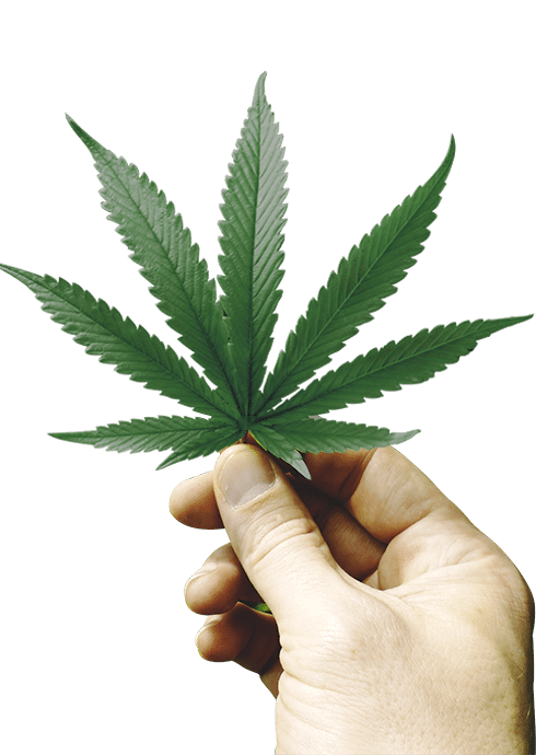 hand-leaf