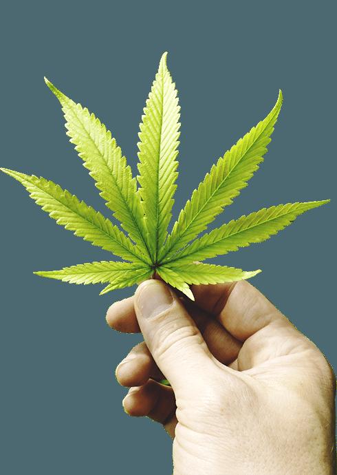 Medical Marijuana-leaf