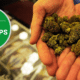 the best pot shops in every state