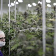 Nevada launches recretional marijuana