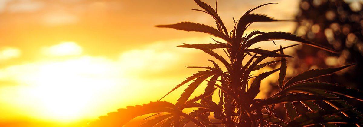 cannabis-for-chronic-pain