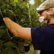 nevada pot retailers running on fumes'