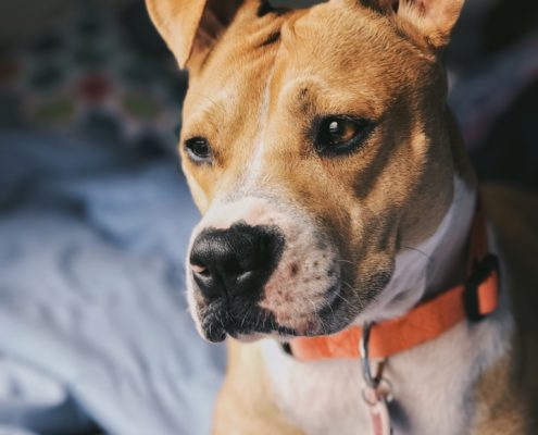 WHAT YOU NEED TO KNOW ABOUT CANNABIS FOR PETS