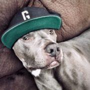 pets and marijuana