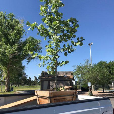 Tree planting 1 1