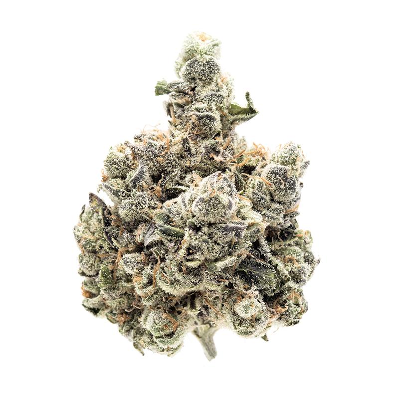 DGF - Blueberry