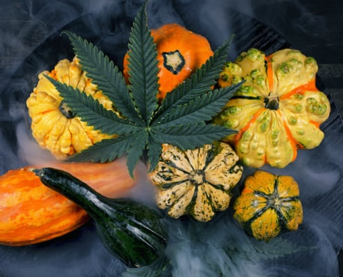 Harvest fall background with gourds and cannabis leaf