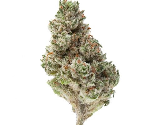 Greenway Medical - Pootie Tang
