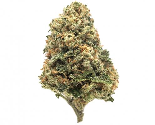 Greenway Medical - Rose OG (1)