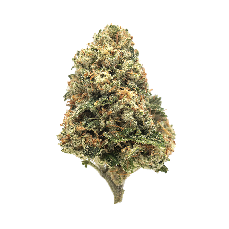 Greenway Medical Rose OG 1