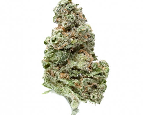 Greenway Medical UK Cheese