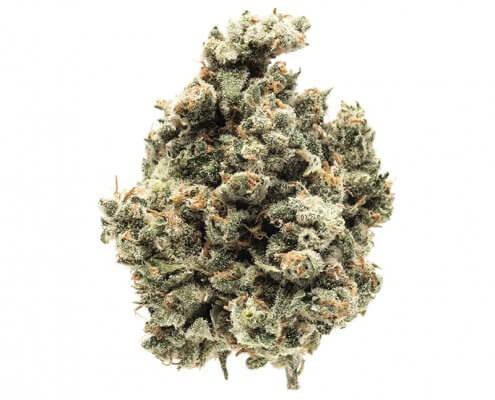 Mother Herb Yoda OG