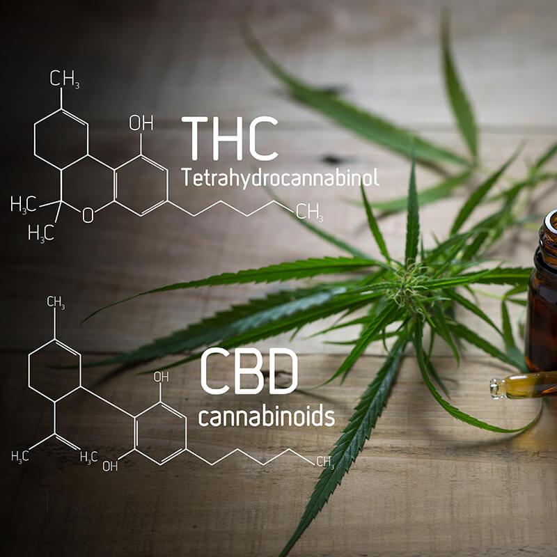 cannbis 101 endocannabinoid system
