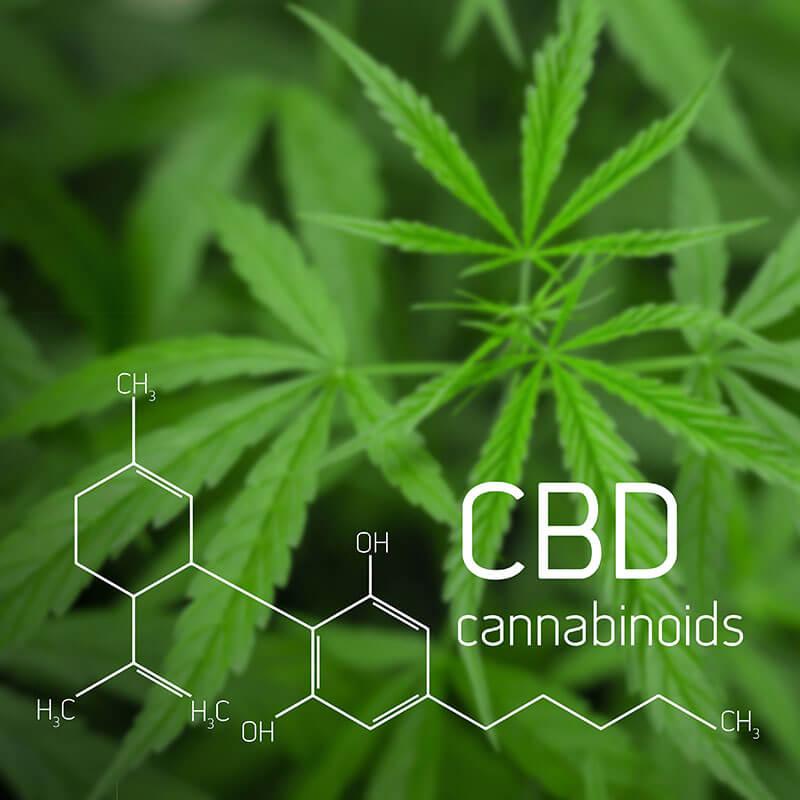 cannbis 101 what is cbd cannabidiol