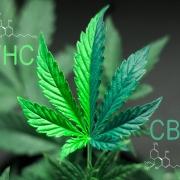 high cbd low thc