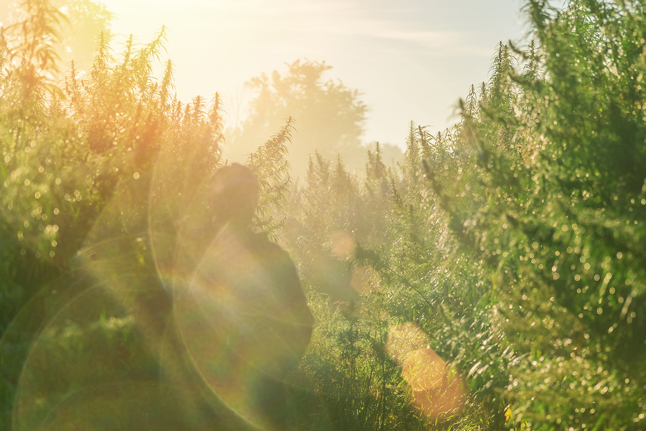 Bhutan Has Way Too Much Wild Cannabis