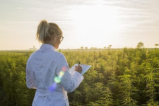 How Hemp and Marijuana are Similar