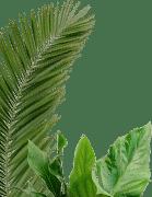 cornerplants left