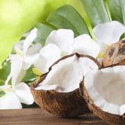 Cannabis and Coconut Oil header