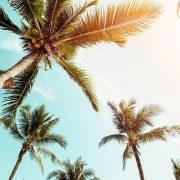 How To Make Cannabis Coconut Oil header