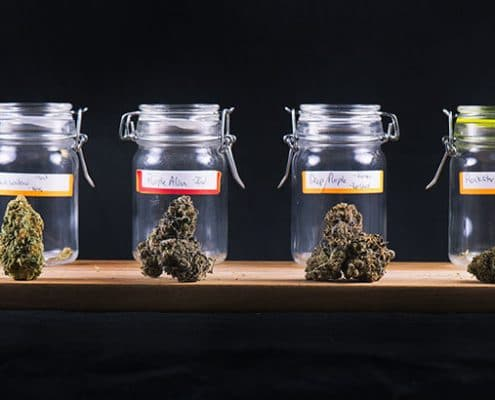 Jars of different cannabis