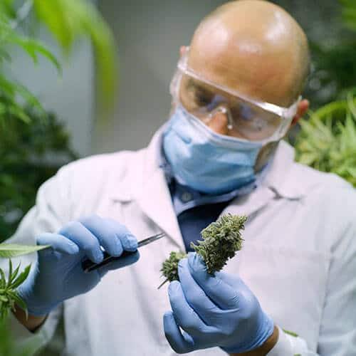 medicalc cannabis