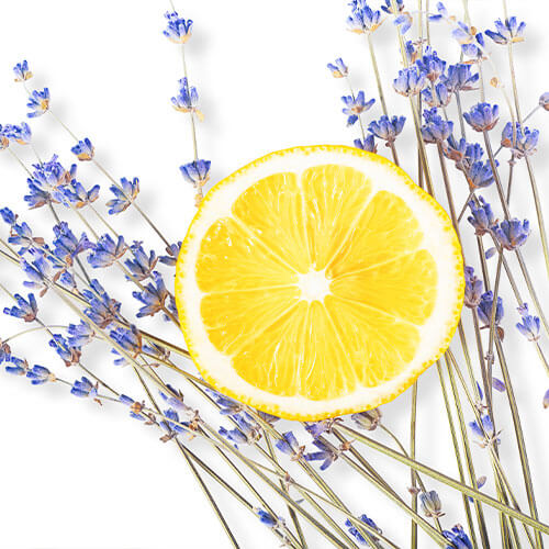 Lemon Lavender Social Tonic