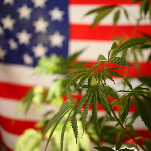 Medical Marijuana Card Online in State Sept